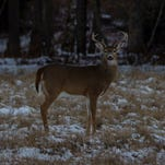 Dave Wolf: Excitement fills the air for deer hunting