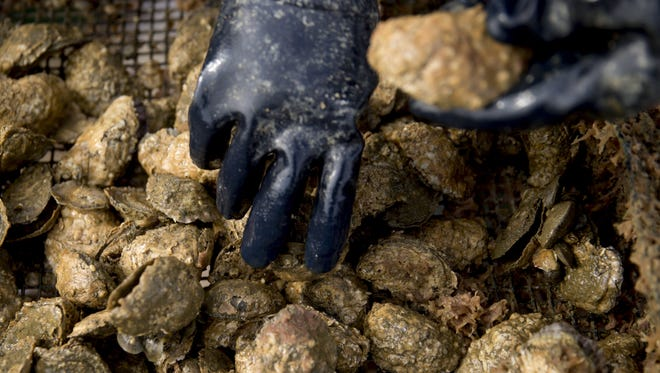 A sewage spill in the Delaware Bay forced DNREC to put a halt on shellfish harvesting Tuesday. Though it's not prime season for harvesting, hundreds of thousands of gallons of sewage have been dumped.