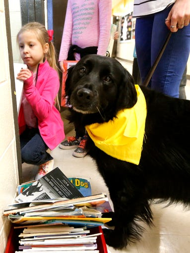 Inca, Paige Saylors' service dog walks the halls with