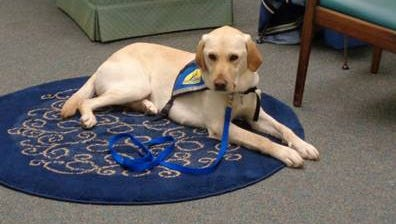 """""""Pawsome"""" birthday party for Roma, the Anderson County Courthouse facility dog on Oct. 8."""