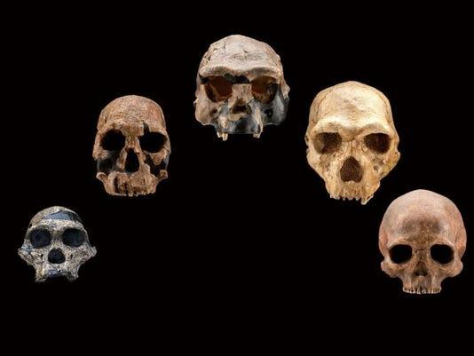 1 HO skull casts front