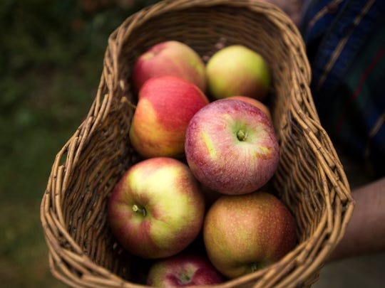 The Newark Valley Apple Festival returns this weekend.