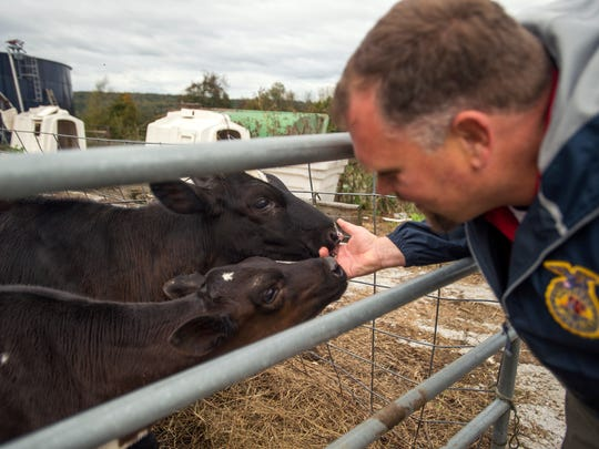 Dutch Hill Creamery owner Brian Aukema greets two 1-year-old dairy cows in their pen at the Aukema Dairy Farm on Thursday. This weekend's Farm Trail event will allow visitors to get up close and personal with the dairy animals and see behind the scenes of how the milking process happens.