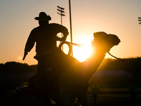 A rider steered his camel towards the finish line at Tioga Downs on Friday.