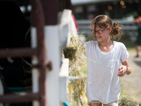 Olivia Holland, of Howes Cave, feeds cows during last year's Broome County Fair.