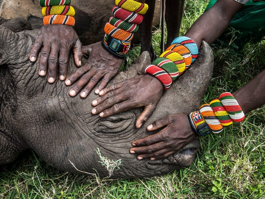 636063565732917059-Nat-Geo-Live---Samburu-warriors-with-young-rhino-Ami-Vitale-2-1-.jpg
