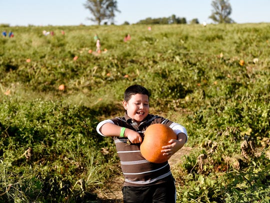 Alex Ramirez, then 8, hauls in his catch for the day after searching for the right pumpkin at Cates Farm Corn Maze and Pumpkin Patch in October of 2014.