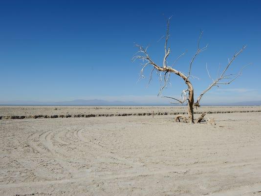 Salton Sea dead tree