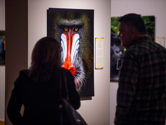 People view a photo of a mandrill taken by Italian