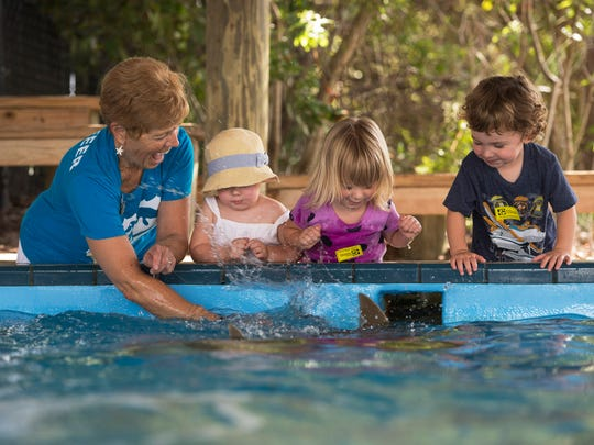 Florida Oceanographic Society volunteer Dee Spera (left) reacts as she and Paisley Hayes, 2, Ruby Bradford and Caleb Iosco, 2, are splashed as they pet and feed cownose stingrays during the Stingray Feeding Program at the Stingray Pavilion of the Florida Oceanographic Society in Stuart.