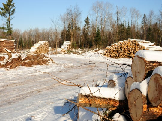 Wisconsin's forestry industry generates about $6.4