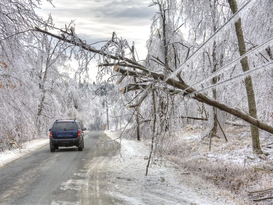 Car drives under dangerous trees weighed down by ice and powerlines after an icestorm.