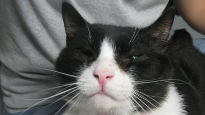 Frankie had successful eye surgery and is looking for a loving home.