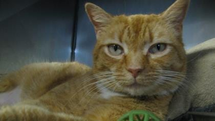 Cinder is friendly, outgoing and confident, and she loves to play.