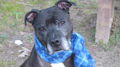 Buddy Boy loves to play fetch and is looking for a friend for life.