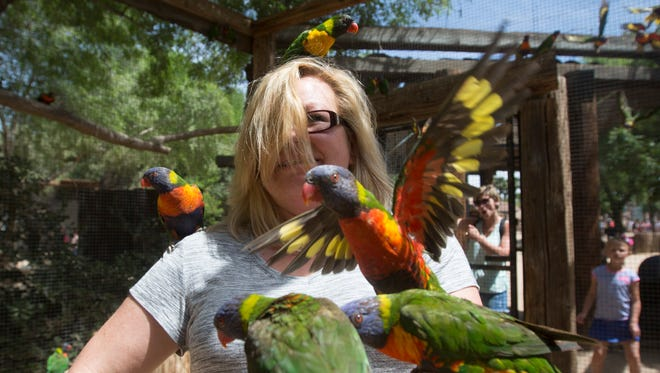 Parrots swarm Jackie Chavez of Santa Clarita, Calif., and eat apples from her hands at the Wildlife World Zoo on April 4, 2015, in Litchfield Park.