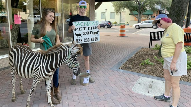 Dale Guffey (right) immediately takes a liking to Zippy the zebra (left). His handler Madison Toro took him around uptown Shleby on Sept. 10 to advertise her business Jackson's Petting Zoo.