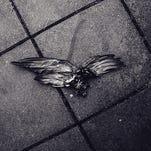 Dead bird on pavement, wings spread