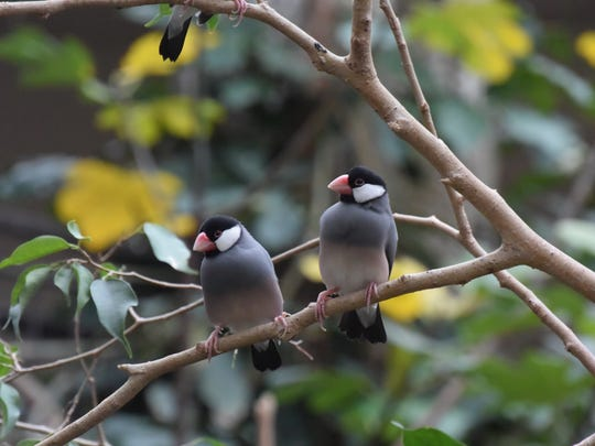 The Bird Kingdom, in Niagara Falls, Ontario, houses dozens of varieties of free-flying tropical birds.