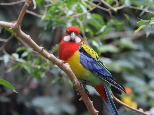 The Bird Kingdom, in Niagara Falls, Ontario, houses dozens of varieties of free-flying tropical birds