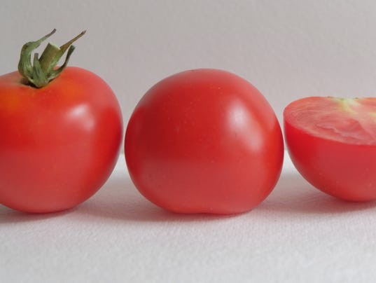 636625934083249917-Red-Racer-tomato-square-aas.jpg