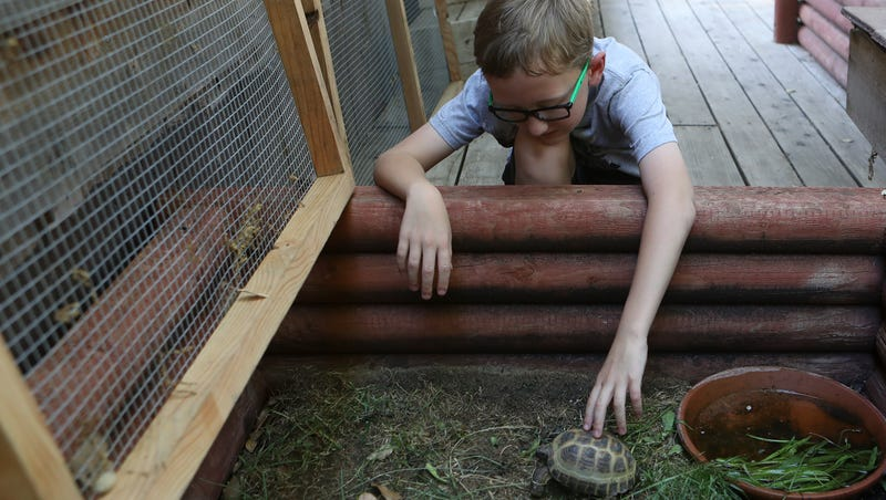 Couple opens doors to abandoned, abused turtles and tortoises