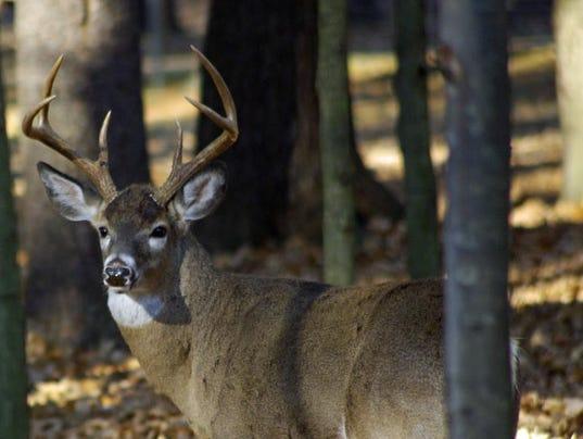 deerhunt5