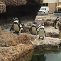 Weekend Guide: Earth Day at Betty Brinn Children's Museum, Penguin Day at the Milwaukee County Zoo and more!