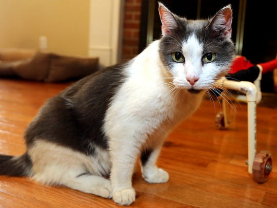 Meet Gypsy, the 15-year-old cat of the VerMulm family,