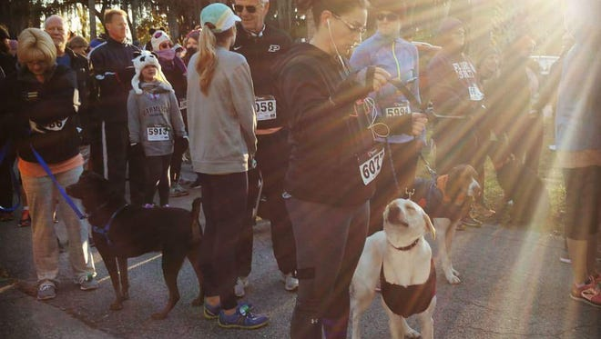 Human and canine runners get read for the Bayfront 5K at the Palm Bay Animal Clinic