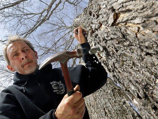 Parker's Maple Barn employee Jon Jonis taps a maple