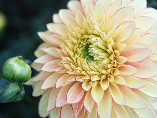 How to create your own flower garden.
