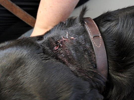 MNJ 0424 US Marshals shoot dog, wrong house 02.jpg