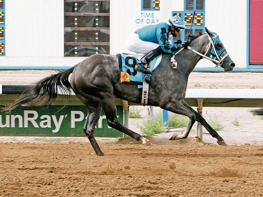Courtesy photo - Coady Photography. Diabolical Dame and jockey Aldo Arboleda cross the wire well in front of their competition in Saturday's 45,000 Russell and Helen Foutz Distaff Handicap at Sunray Park and Casino.