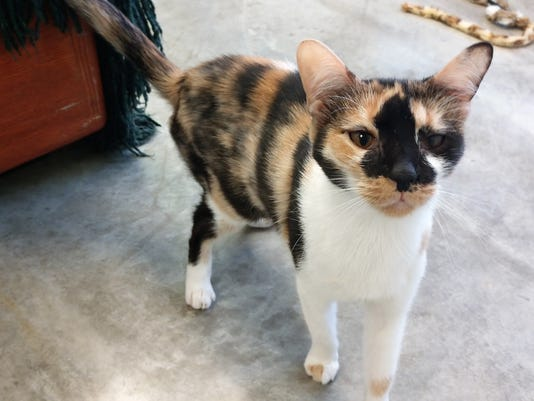 LCHS Pet of the Week: Trinity