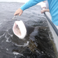 Navarre fishing guide and military friends reel in 200-pound shark in Pensacola Bay