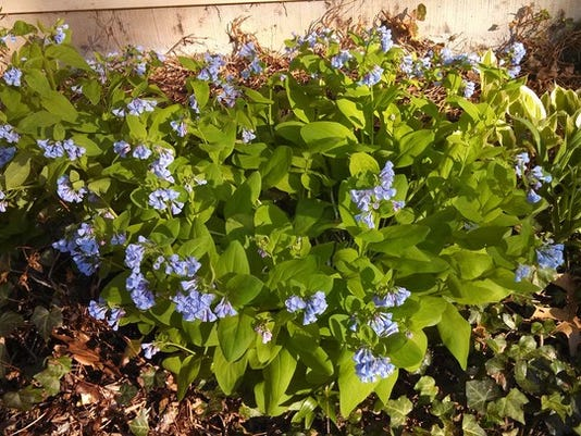 """Joni Cook of Conewago Township writes: """"My first flowers to bloom."""" Submitted"""