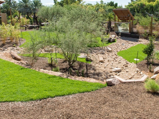 Trees and Shrubs in the new tiger exhibit at the Phoenix