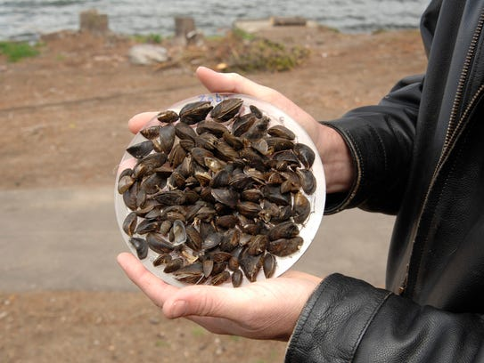 Zebra mussels have completely altered the makeup of