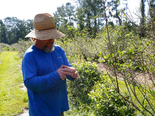 Jack Krause, owner of Blueberry Springs, explains in