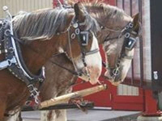 The GoFundMe page for Whisper Hill Clydesdales will