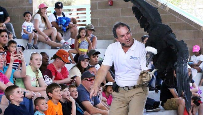 Joe Krathwohl, known as The Birdman of Las Vegas, shows an Andean Condor at the El Paso Zoo.
