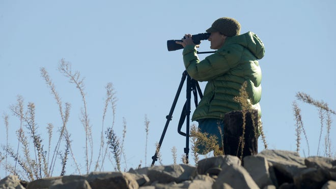 Amy Davis, of Ventura, counts the birds at Lake Casitas. A group of volunteers came out with the local Audubon chapter to participate in the Christmas bird count.
