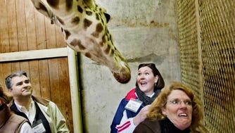 Sat 27 Feb '10 (bddocent5) Photo by Brandon Dill / Special To The Commercial Appeal - Docent trainees (right to left) Judy McRay, Muffin Dixon and Keith Richardson react while feeding giraffes at the Memphis Zoo.