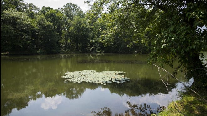 Dorothy Pond in Millbury where a kayaker on Monday, Aug. 10. 2020, found an unidentifiable animal wrapped in duct tape.