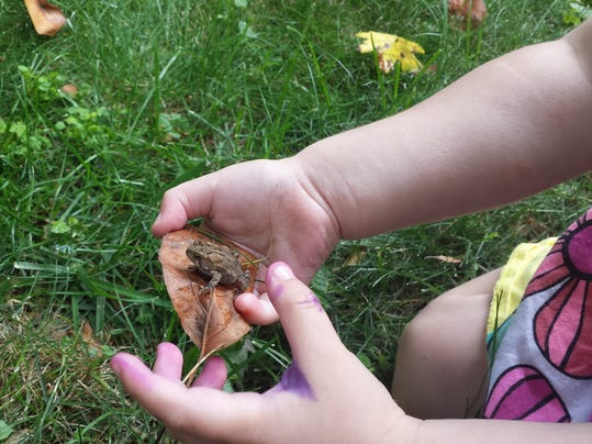 Toddler holding toad - image provided by Claire Goverts