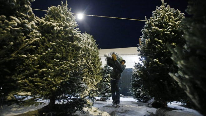 A worker carries a Christmas tree at Boston Hill Farm in Andover, Mass.