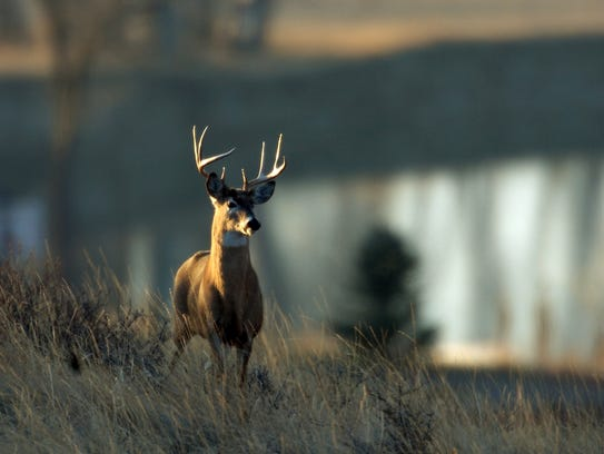 In this 2007 photo, a whitetail deer buck stands on