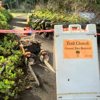 Silver Falls State Park trails near South Falls closed Wednesday as crews cut down hazardous firs in and around the falls.