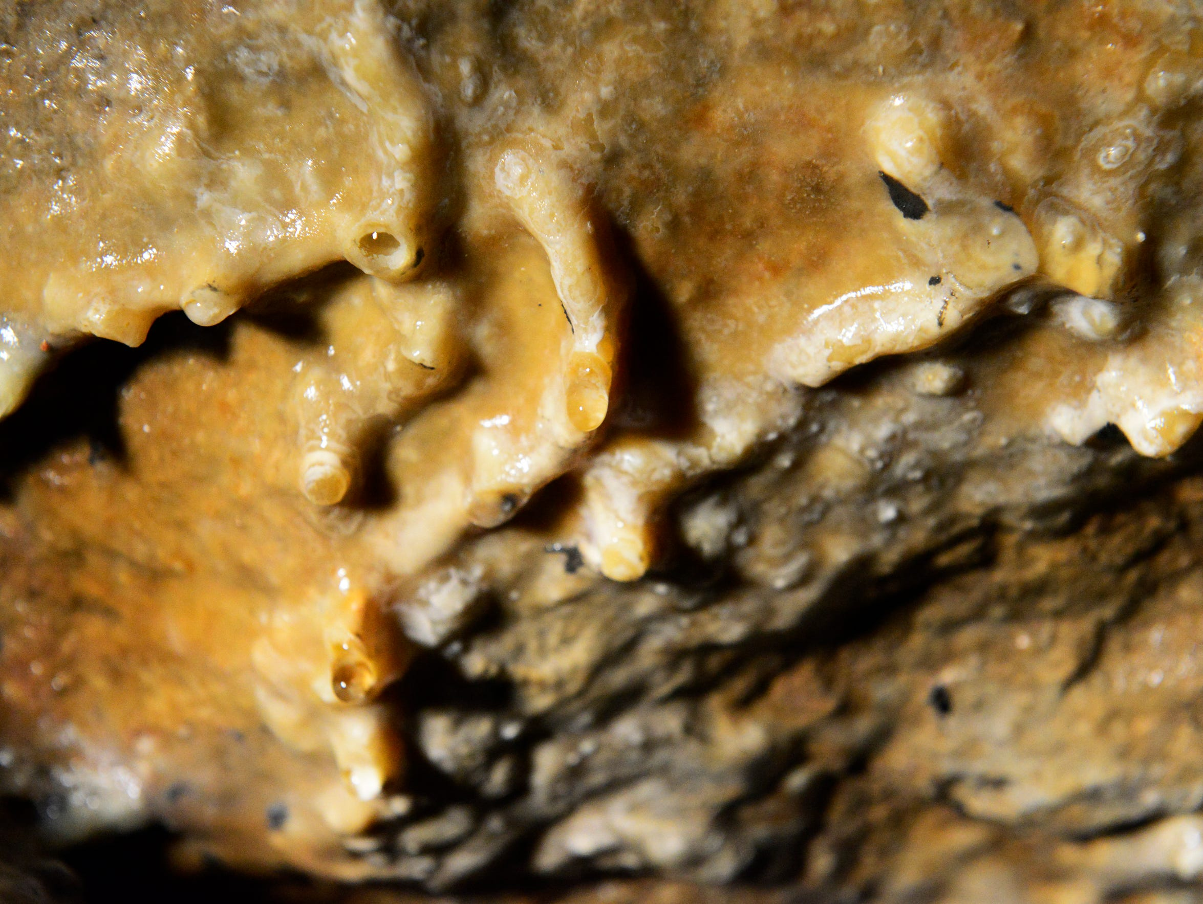 The limestone cave is 52 feet underground, with a temperature